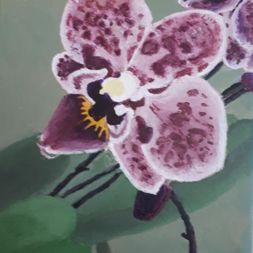 M. Lachniet  Orchidee    o.l.v. Marijke Wessel